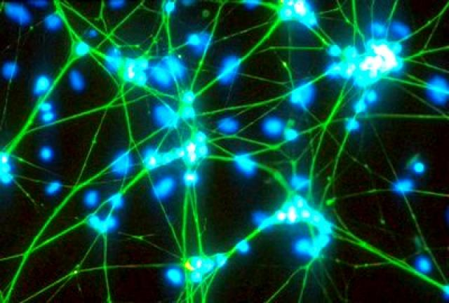 تحقیق مفهوم انسان شناسی یا آنتروپولوژی
